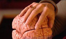 Margriet Sitskoorn: Het maakbare brein